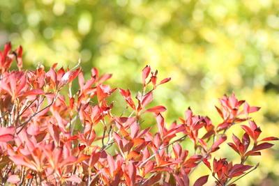 紅葉♪_e0179508_13505692.jpg
