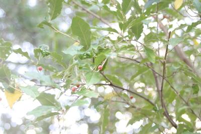 紅葉♪_e0179508_1353535.jpg