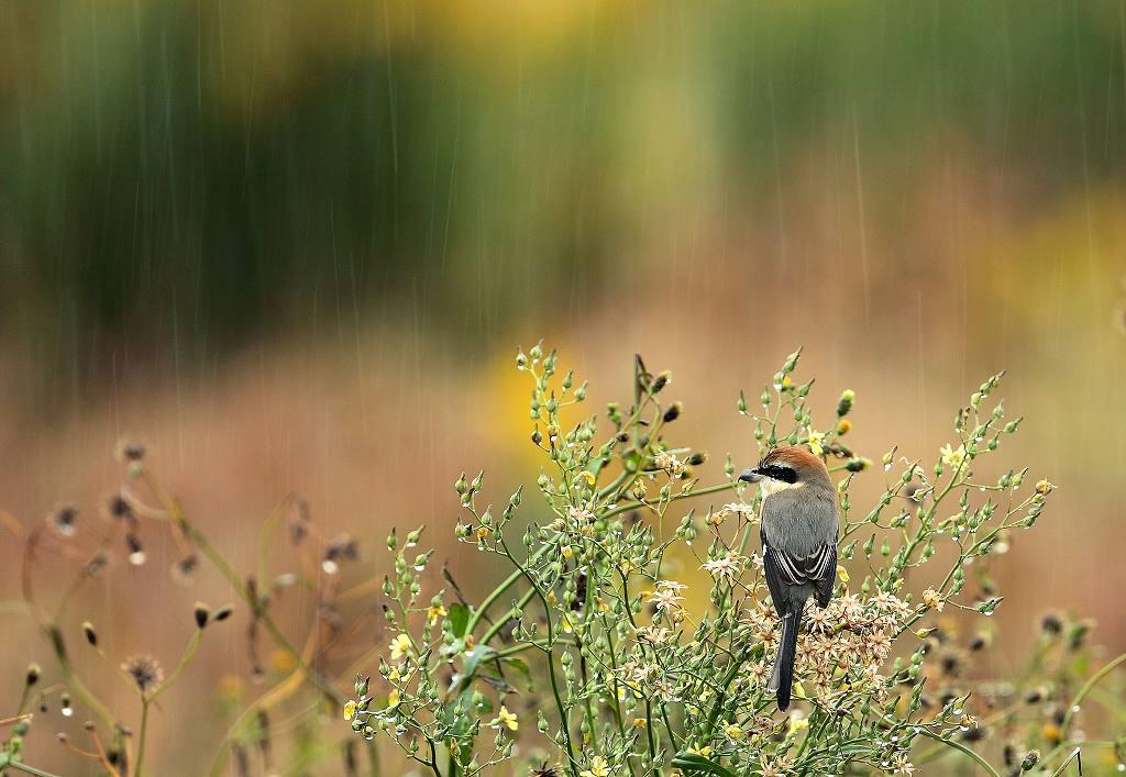 雨に濡れて ・・2・・_d0074828_20573649.jpg