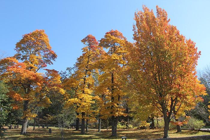 10月の風景_c0135045_7523296.jpg