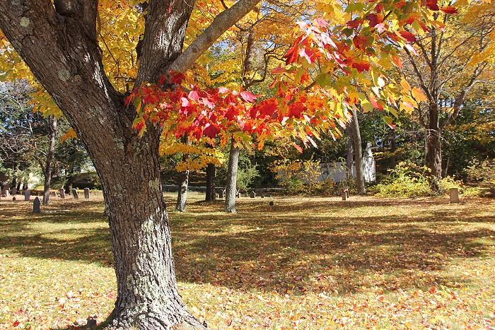 10月の風景_c0135045_7531076.jpg