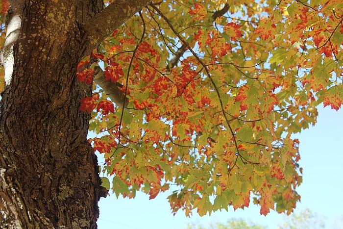 10月の風景_c0135045_758468.jpg