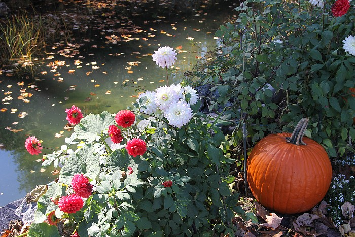 10月の風景_c0135045_7595232.jpg