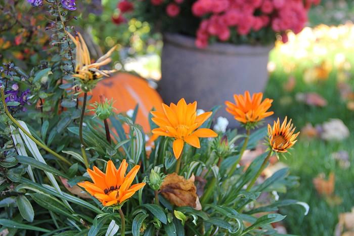 10月の風景_c0135045_802082.jpg
