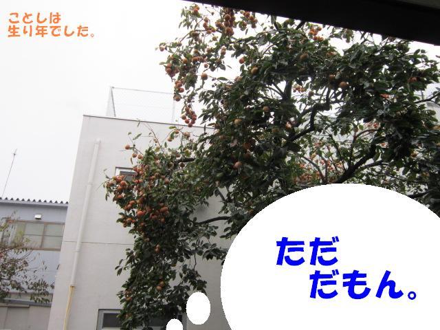 b0194556_1210998.jpg