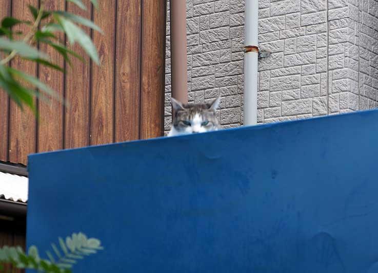 猫抗争_b0057679_8282256.jpg