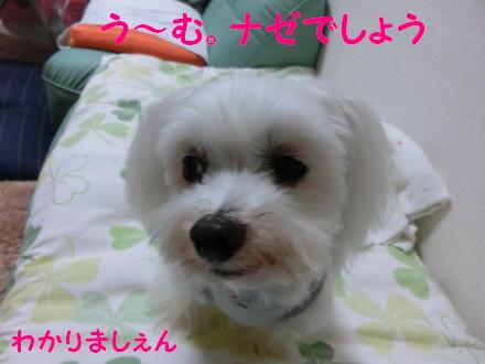 b0193480_1627354.jpg