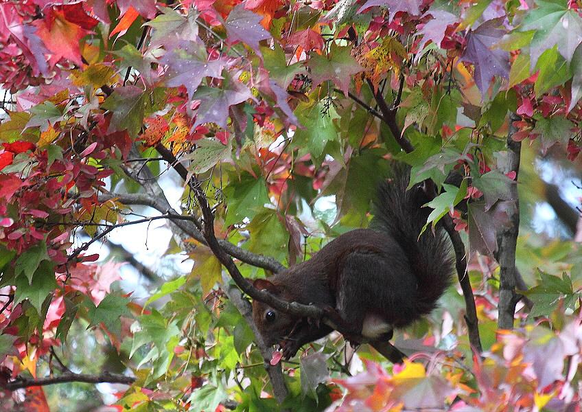 秋色の公園のエゾリス_c0113597_14325277.jpg
