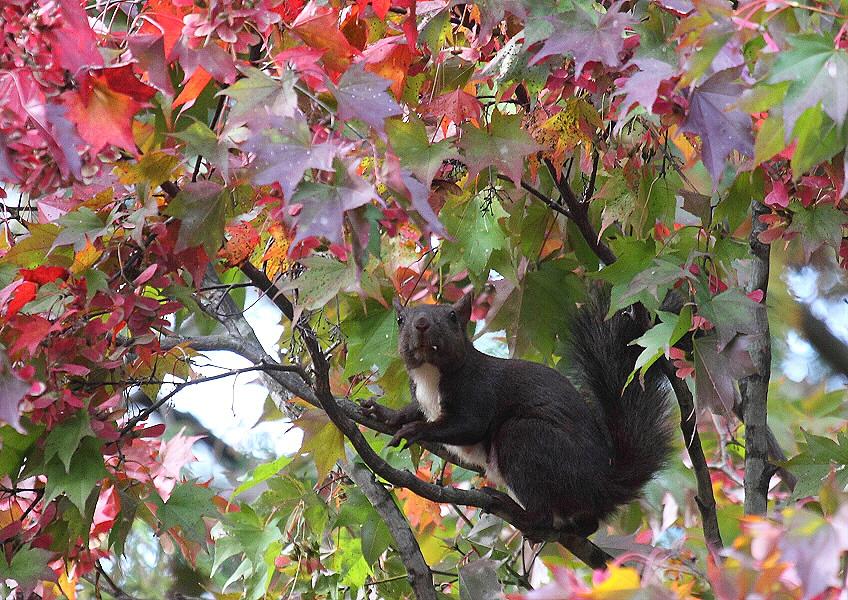 秋色の公園のエゾリス_c0113597_14331665.jpg