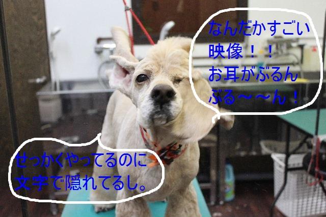 b0130018_9333631.jpg