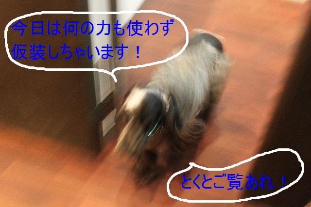 b0130018_9405475.jpg