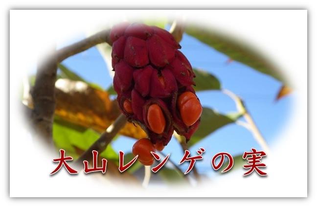 f0126282_1647846.jpg