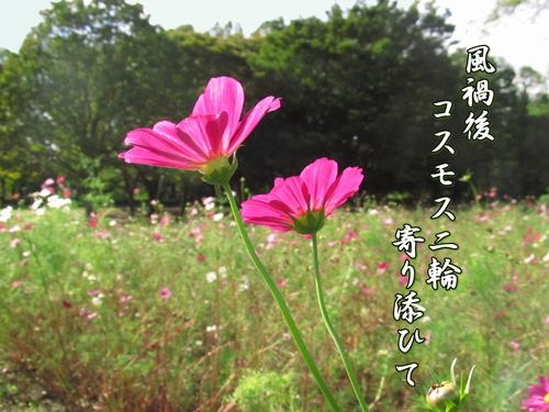 f0137096_16202995.jpg