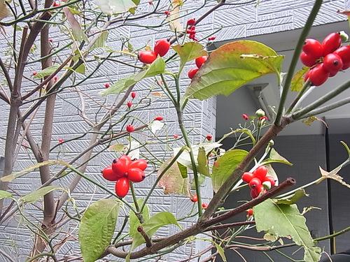 秋の木の実の席札♪_b0105897_003918.jpg