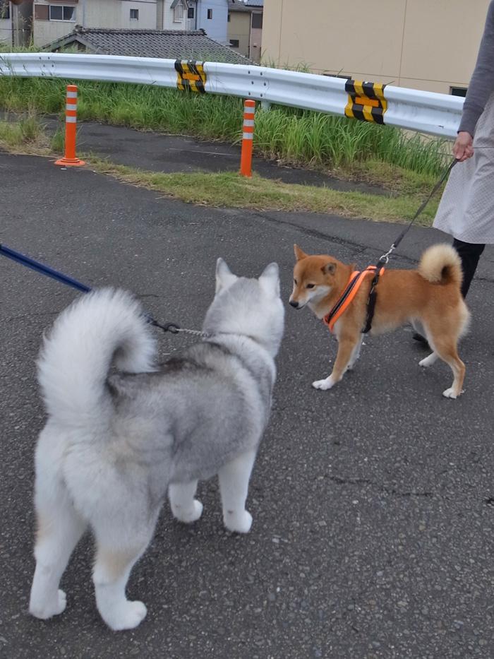 お散歩やっほー♪_c0049299_10233.jpg