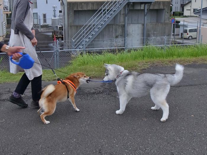 お散歩やっほー♪_c0049299_102425.jpg