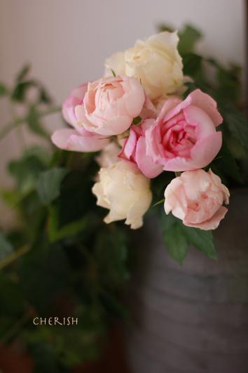 バラに恋する季節_b0208604_9134079.jpg