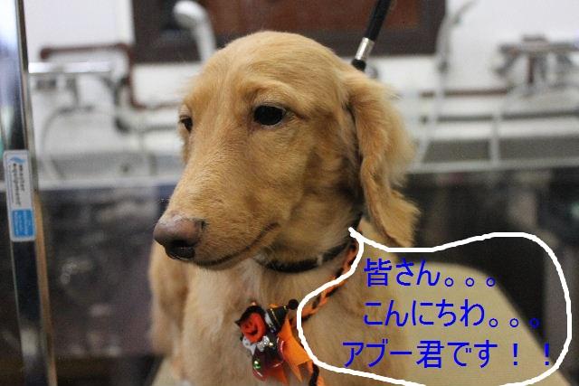 こんばんわぁ~~!!_b0130018_21491517.jpg
