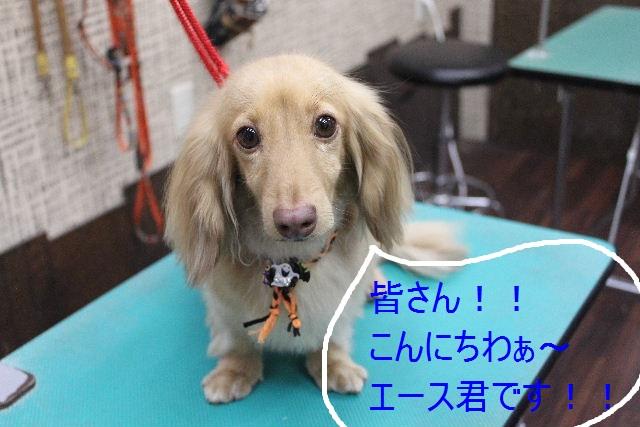 こんばんわぁ~~!!_b0130018_21514677.jpg