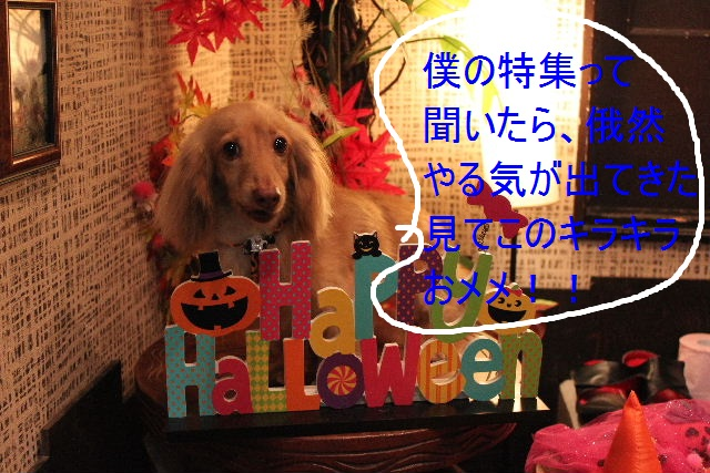 こんばんわぁ~~!!_b0130018_21524561.jpg