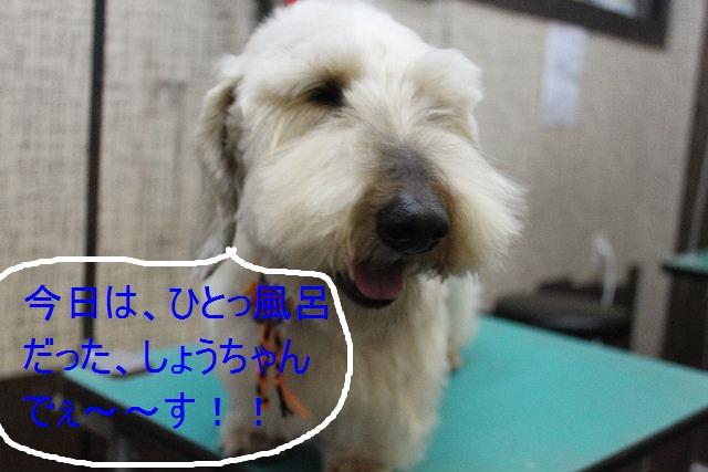 こんばんわぁ~~!!_b0130018_21555616.jpg