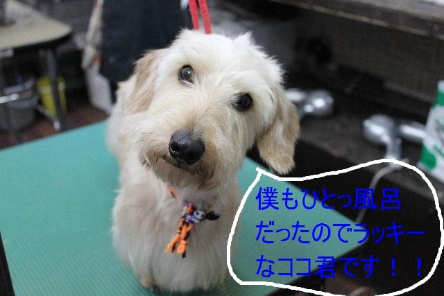こんばんわぁ~~!!_b0130018_21562980.jpg