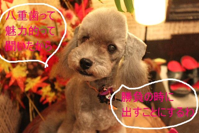 こんばんわぁ~~!!_b0130018_21573839.jpg
