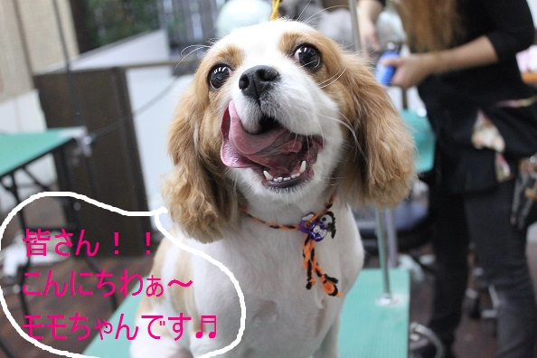こんばんわぁ~~!!_b0130018_2205624.jpg