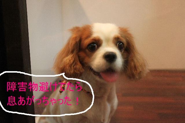 こんばんわぁ~~!!_b0130018_221106.jpg