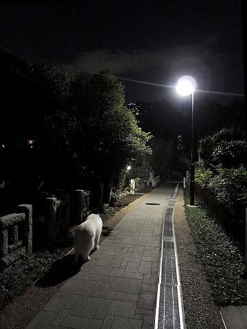 ロングなお散歩_c0062832_6455156.jpg