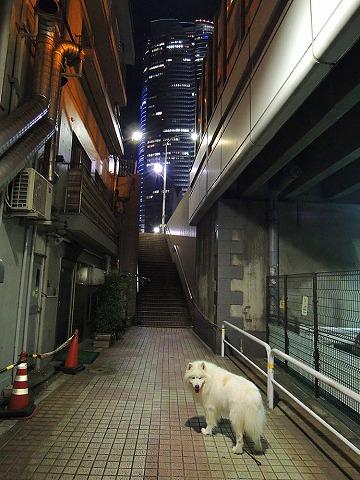 ロングなお散歩_c0062832_6455822.jpg