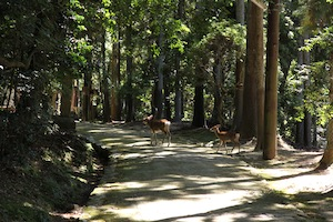 Walking in the Old Forest of Nara 2013/09/27_d0010432_19174541.jpg