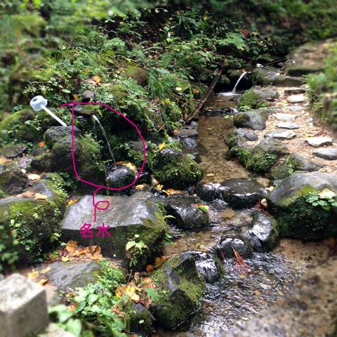 栃尾の森に行くの巻_d0156336_20515782.jpg