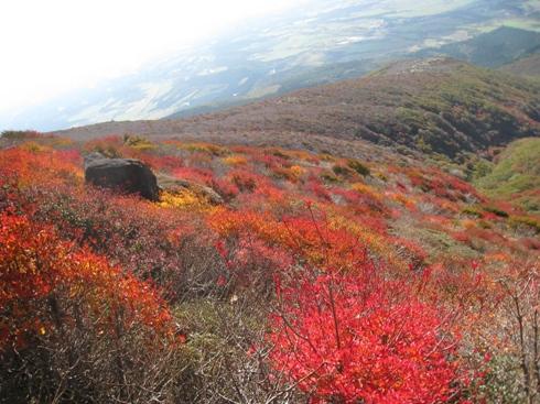南くじゅうの紅葉 久住山と俊ちゃんの今日の山歩き_c0077338_22283295.jpg