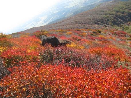 南くじゅうの紅葉 久住山と俊ちゃんの今日の山歩き_c0077338_22284167.jpg