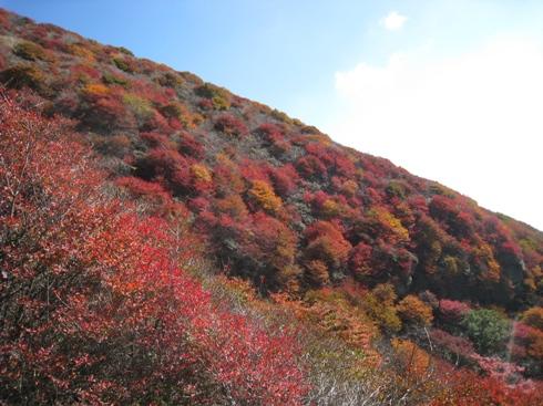 南くじゅうの紅葉 久住山と俊ちゃんの今日の山歩き_c0077338_645287.jpg