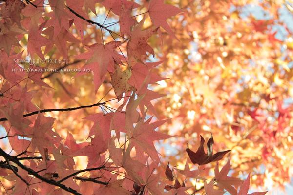 秋が重なる**_b0197639_17454799.jpg