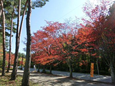2013八ヶ岳・棒道ウォーク・下見_f0019247_21582470.jpg