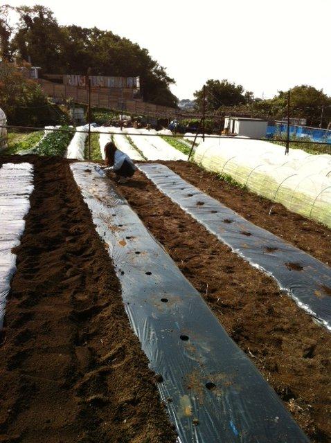 今朝 蚕豆&グリンピース、スナックエンドウの播種をしました_c0222448_1555328.jpg