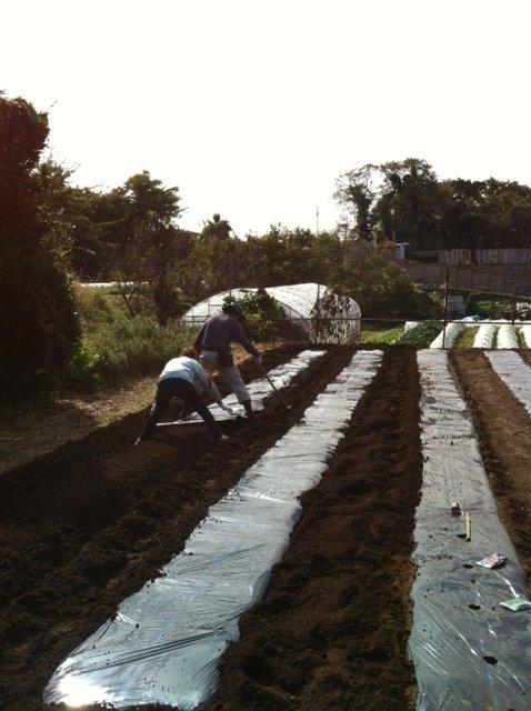 今朝 蚕豆&グリンピース、スナックエンドウの播種をしました_c0222448_1555368.jpg
