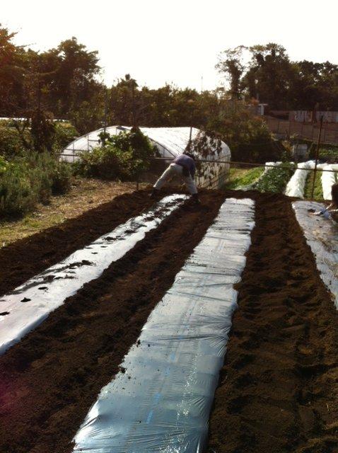 今朝 蚕豆&グリンピース、スナックエンドウの播種をしました_c0222448_15554437.jpg