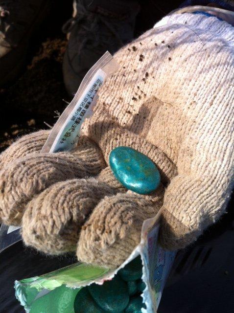今朝 蚕豆&グリンピース、スナックエンドウの播種をしました_c0222448_15562182.jpg