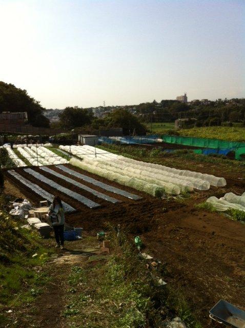 今朝 蚕豆&グリンピース、スナックエンドウの播種をしました_c0222448_1557026.jpg