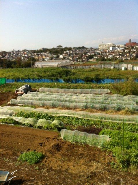 今朝 蚕豆&グリンピース、スナックエンドウの播種をしました_c0222448_15571244.jpg