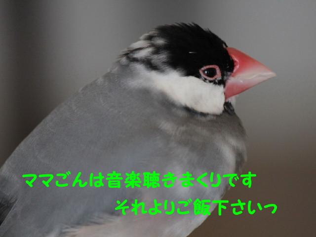b0158061_23494582.jpg