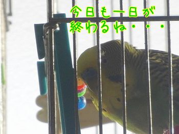 f0196665_2250532.jpg