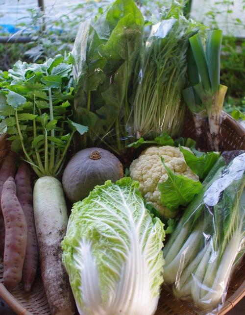 今週の野菜セット(10/29~11/2着)_c0110869_15223252.jpg