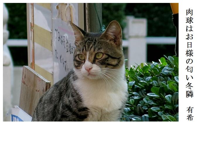 猫_a0248481_0354727.jpg