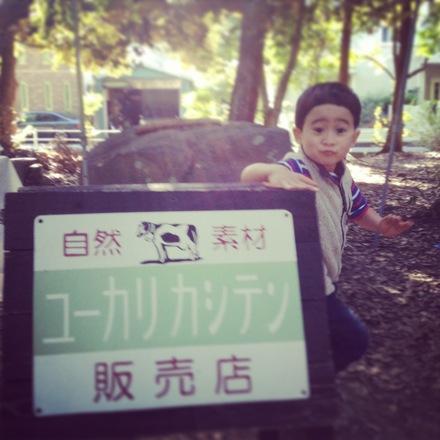 静岡でのユーカリとタイヨウ_d0161584_13343580.jpg