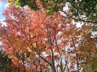 紅葉が始まっています。_d0027486_11301067.jpg